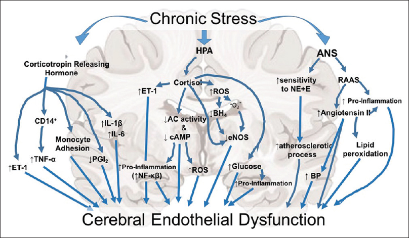 Cerebrovascular dysfunction with stress and depression