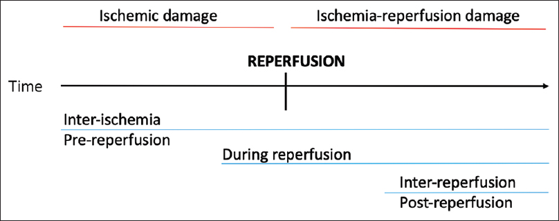 Figure 1: The three timings of hypothermia relative to the timing of ischemic damage and ischemia-reperfusion damage